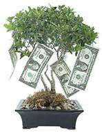 Litle Moneytree